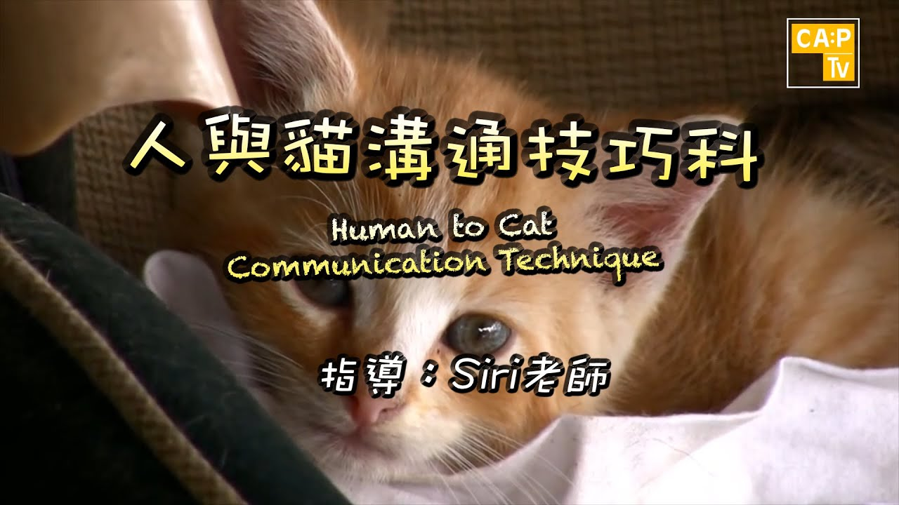 CapTV【人與貓溝通技巧科】 - YouTube