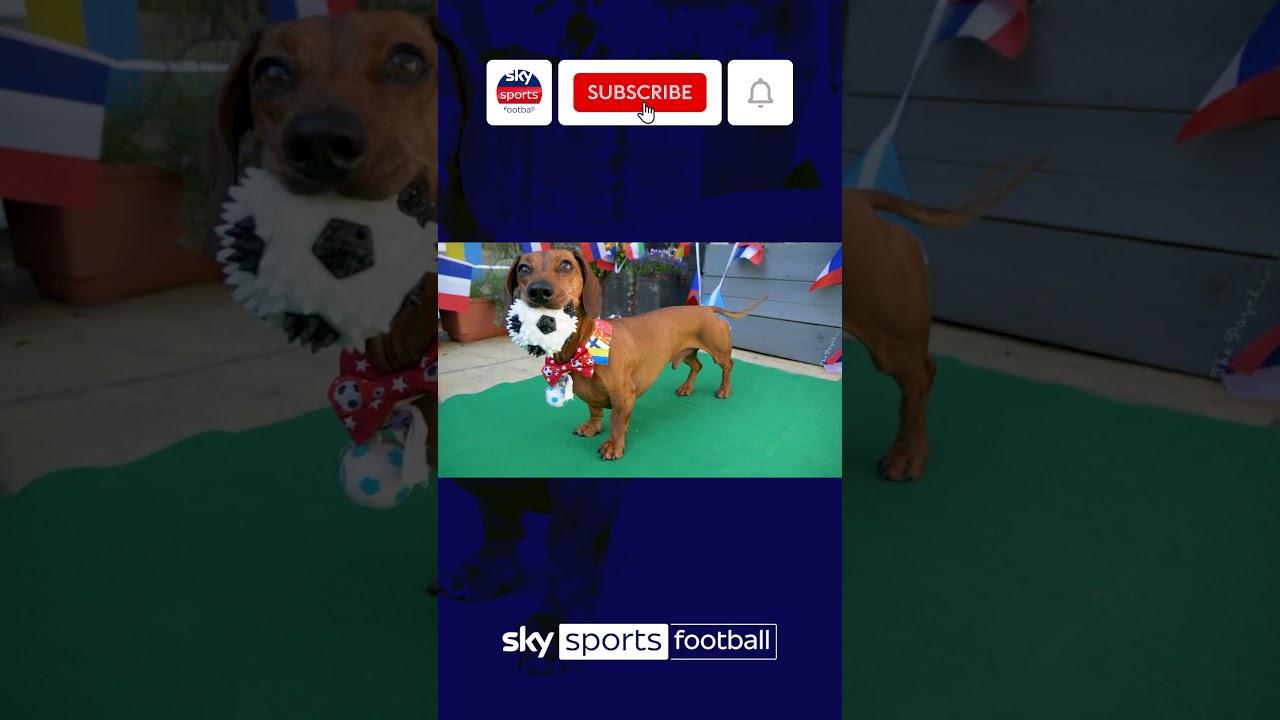 Psychic Sausage Dog predicts Germany vs France result 🐶