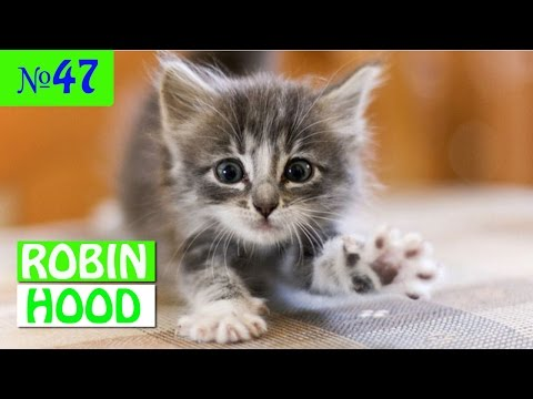 ПРИКОЛЫ 2017 с животными. Смешные Коты, Собаки, Попугаи // Funny Dogs Cats Compilation. Март №47