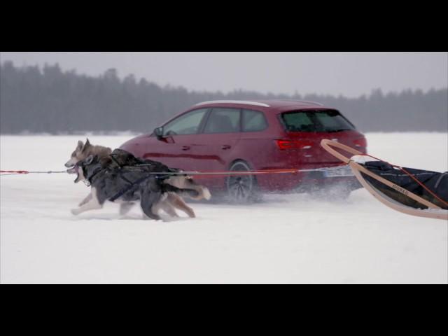 SEAT - 6 Huskies And 300 Horses