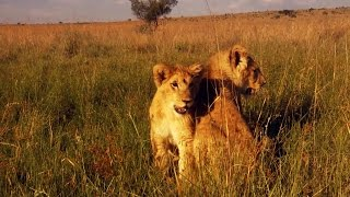 Lions George and Yame