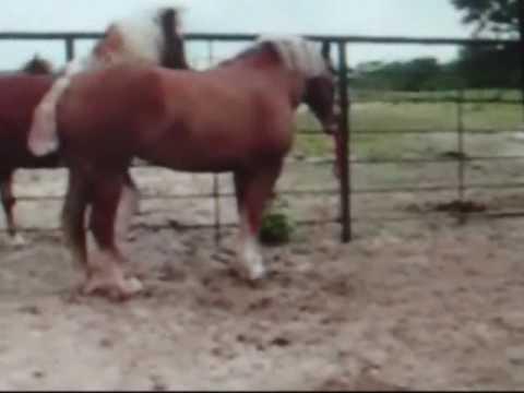 horses mating - YouTube