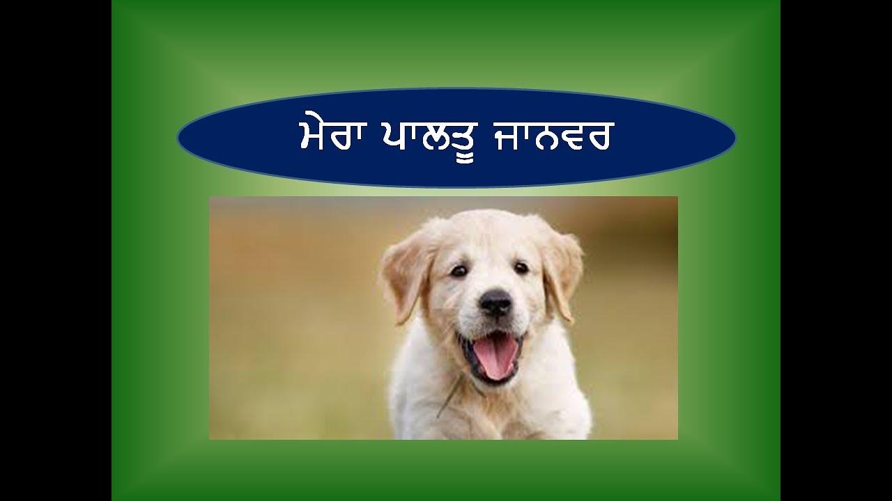 Essay on my dog in punjabi | Essay on my pet animal | Essay on my favourite  animal