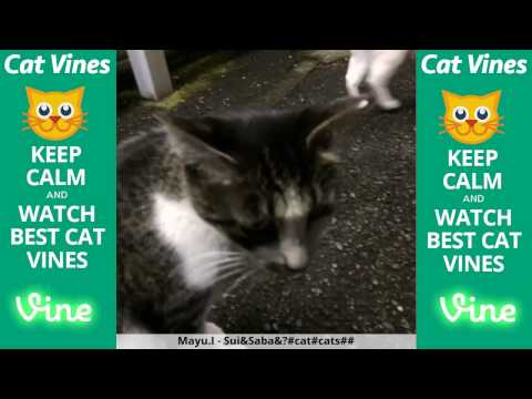 Funniest Cat Vines #59 - Updated August 17th, 2015