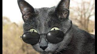 Забавные кошки в очках