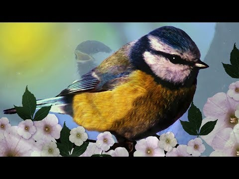 "Peaceful Relaxing Instrumental Music, Meditation Calm music ""Meadow Song Birds"" by Tim Janis"