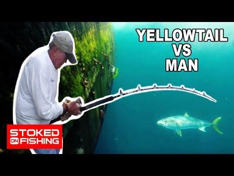 Guadalupe Island Yellowtail vs Man