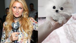 "Re: Paris Hilton Correctly Spent $13k On ""world's Smallest Pomeranian"""