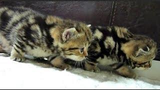 Видео смешные котята 20, подборка 2013-2014