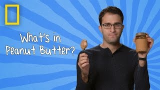 What's in Peanut Butter? | Ingredients With George Zaidan (Episode 7)