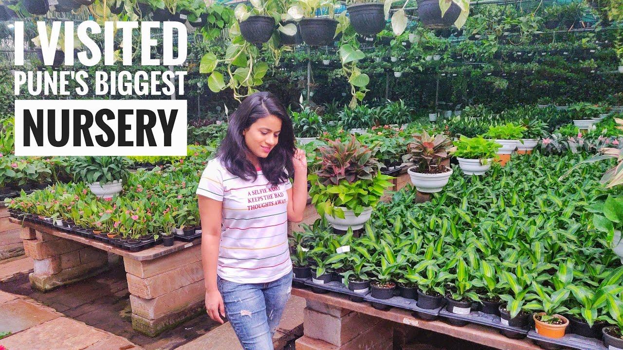 Gest Plant Nursery In Pune Sanjay