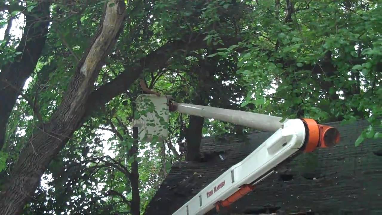 how to cut tree branches