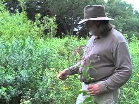 Elk medicine with Matthew Wood