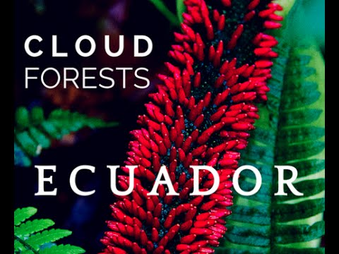 The Cloud Forests of Ecuador