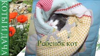 Ребенок кот. Смешные кошки и коты, приколы про кошек