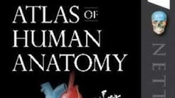 Netter's Atlas Of Human Anatomy | REVIEW OF THE BOOK | 2019