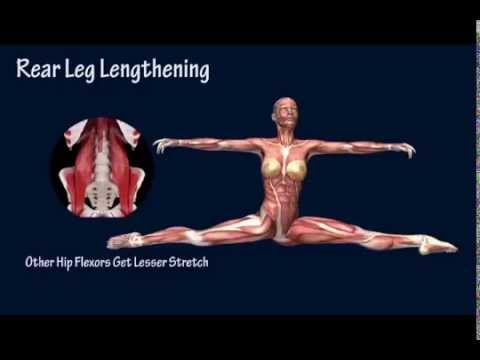 How to Front Split Open Muscle Anatomy Training Program ...