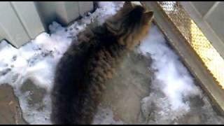 Кот хочет кошку, весна. .mp4(Кот клеит кошку Весна., 2011-03-05T07:47:09.000Z)