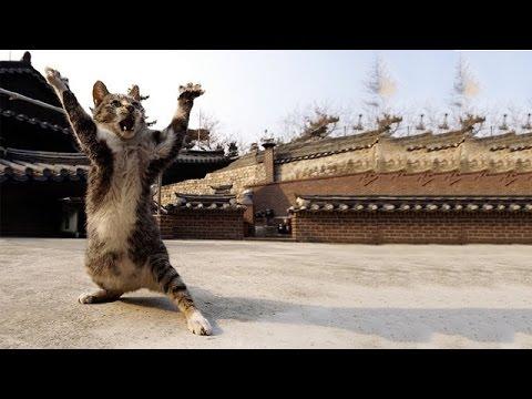 Funny Ninja Cat 2014 [HD]