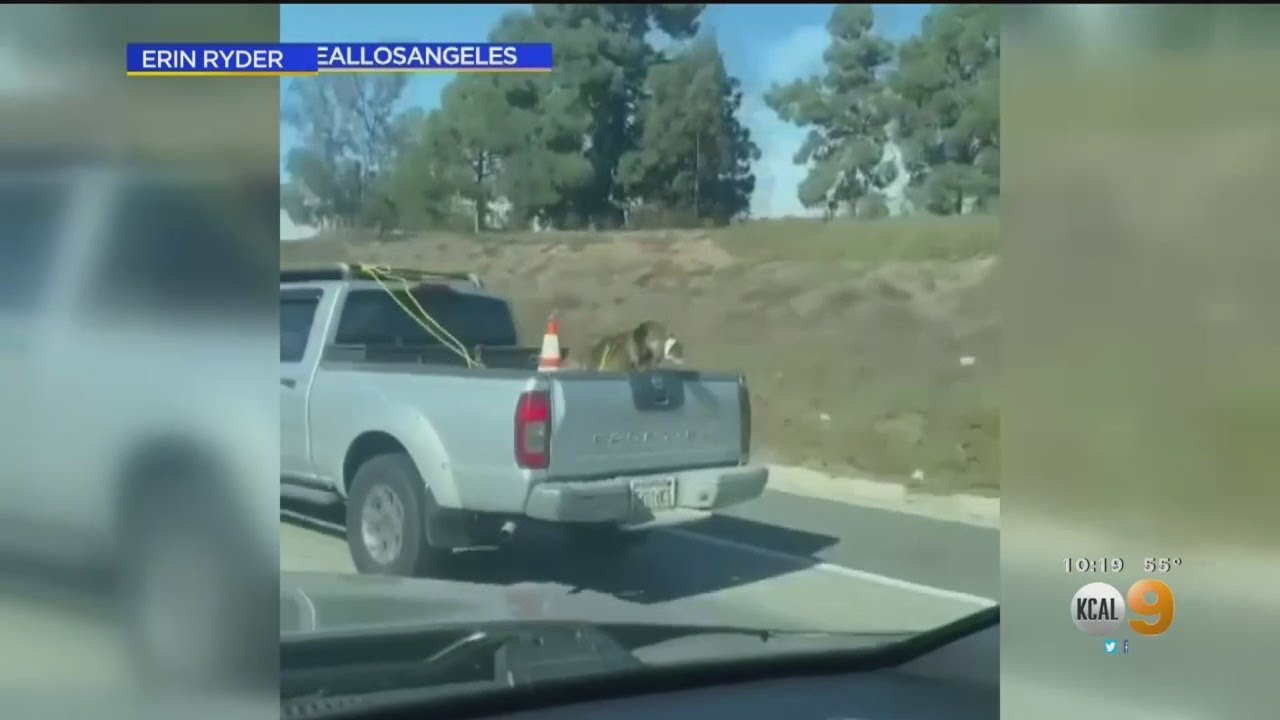 Owner Hands Over Pets After Viral Video Showed Matted Dog with Mouth Taped in Truck Bed