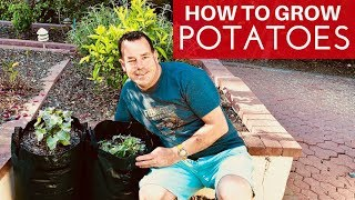 How To Grow Potatoes The Easy Way