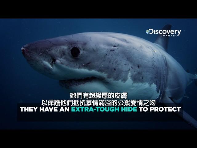 Discovery鯊魚的害羞事--《鯊魚週2017》7月24日 ~ 7月30日,每晚8點首播。