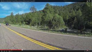 U.S. 60 to Indian Route 12 toward Cibecue, AZ, Black Bear on the Road, 19 June 2015, GP088823
