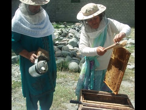 Pakistani Honey project Plan Bee Wins World Challenge 2008