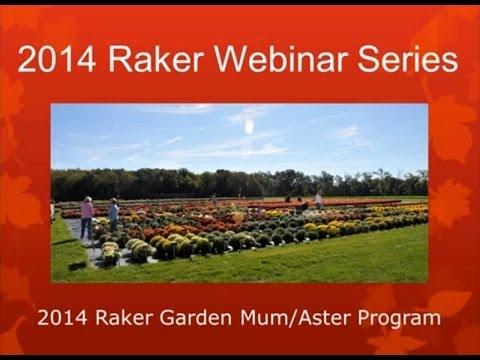 2014 Raker Mum Aster Daisy Webinar