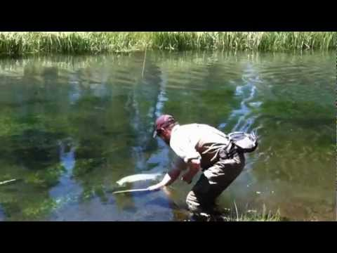 Trophy Trout - Fly Fishing near Bend Oregon on the Fall River