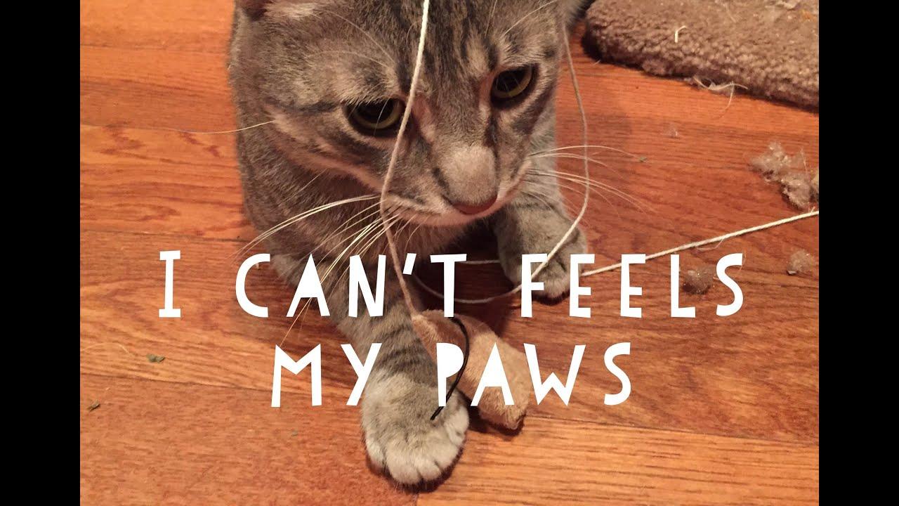 Funny Cat High On Catnip