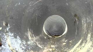 bird in vent