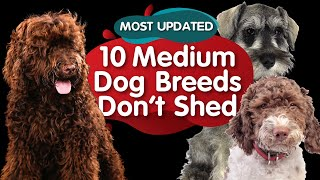 Top 10 Medium Size Dog Breeds That Dont Shed (MOST UPDATED)