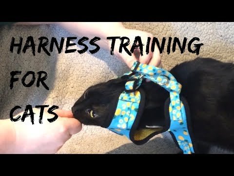 Harness Training Your Cat (featuring Trash Bag)