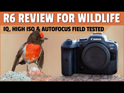 Canon R6 Review