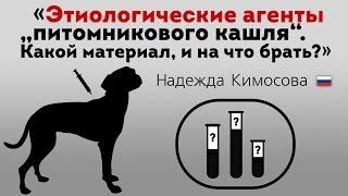 Этиологические агенты «питомникового кашля». Респираторные заболевания