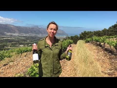 False Bay & Peacock Wild Ferment: Coenecoop Wine Traders