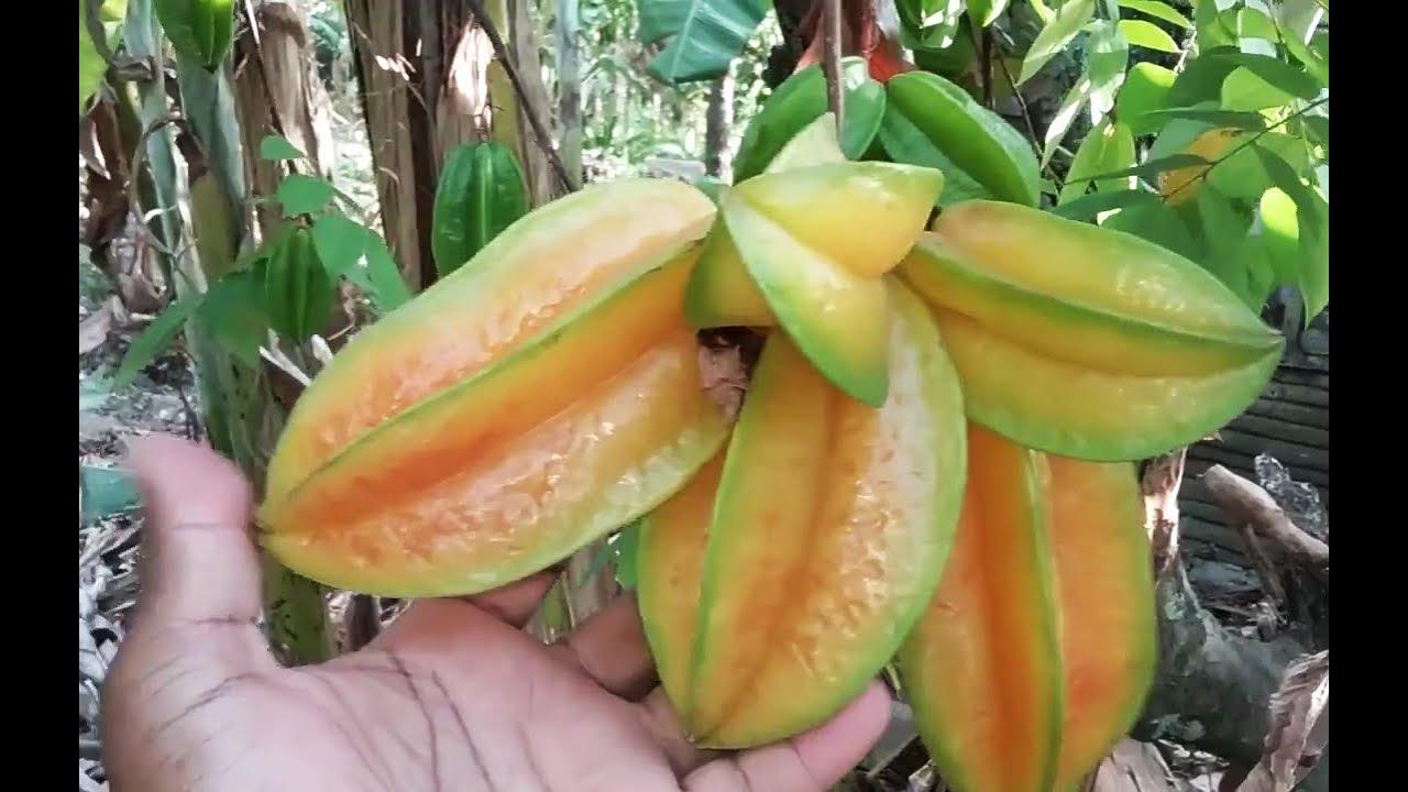 Esta Fruta Es Poco Conocida Pero Quedaras Impresionado Cuando Sepas Sus Beneficios