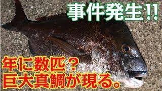 【衝撃】ファミリー釣り場で信じられないサイズの高級魚が釣れた…