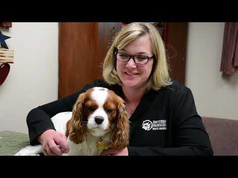 Meet Angie Gearhart, DVM - Iowa Veterinary Wellness Center
