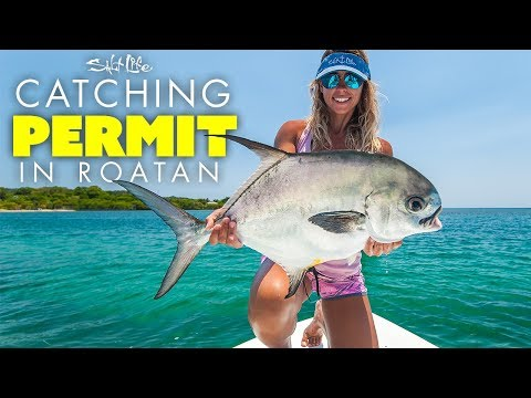 Catching Permit In Roatan | Salt Life