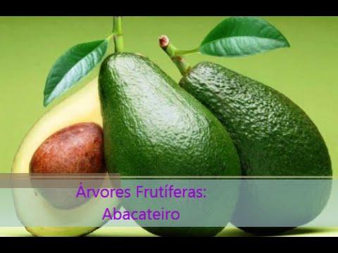 Árvores Frutíferas: Abacateiro
