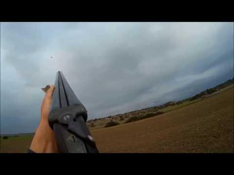 North Cyprus Song Thrush  (turdus tordo τσίχλα zorzales) Hunting 2017 (1)