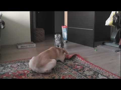 Cat VS Dog. Wrestling Match.