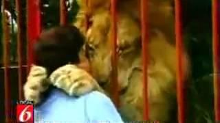 Любовь льва к человеку