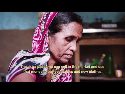 Biotechnology : Changing lives in Asia-Pacific | Central Rice Research Institute (India)