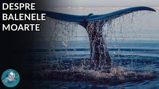 De Ce Nu Trebuie Sa Atingi O Balena Moarta