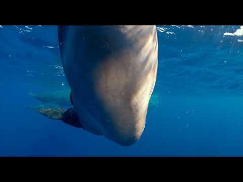 Кадры из фильма Земля: Один потрясающий день