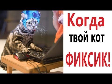 Лютые приколы. КОГДА КОТ ДУМАЕТ, ЧТО ОН ФИКСИК!!! СМЕШНЫЕ КОТЫ! Угар до слёз!! – Domi Show