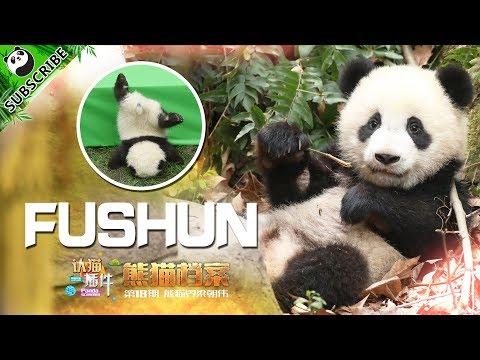 【Panda Scanning】Ep8 Do You Know How To Identify Fushun? | iPanda